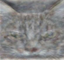 An Ideal Cat for Google's Neural Network