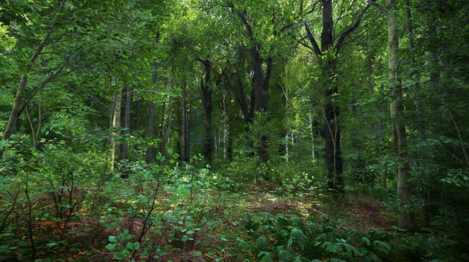 KCD Forests